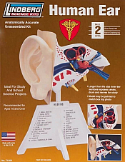 LINDBERG 7 1/4 HUMAN EAR MODEL KIT BODY PARTS MALE FEMALE SCIENCE 71308 BNIB